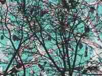 5150 Teal Forest